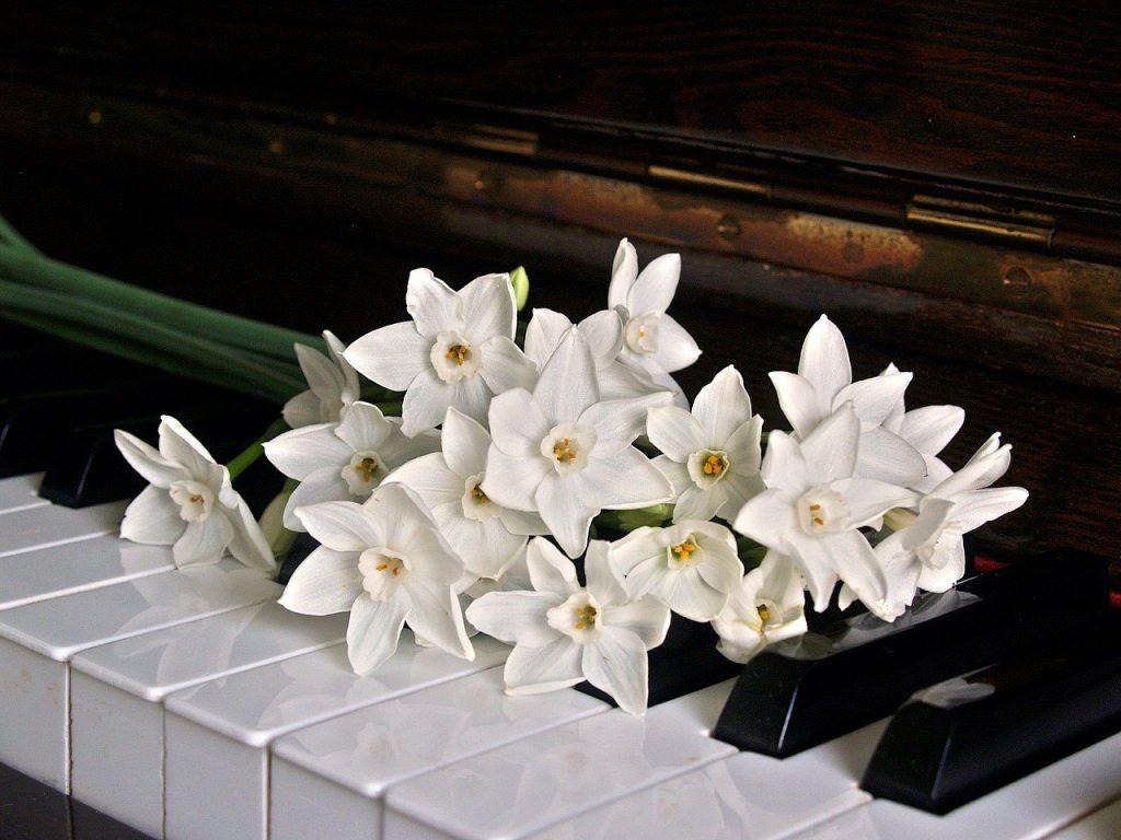 Làm thế nào để luôn giữ lửa đam mê với piano ảnh 2
