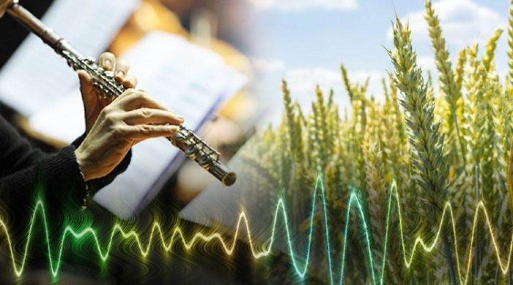 Âm nhạc có ảnh hưởng như thế nào đối với thực vật ảnh 1